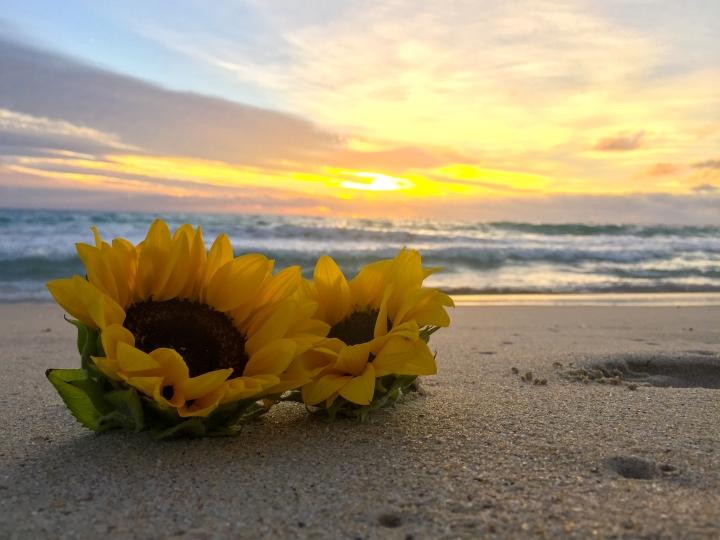 Benjamin's Sunset 08.04.2018 2